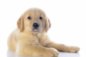 Eine Haftpflichtversicherung für den besten Freund des Menschen kann sich lohnen, wenn der Hund zum Beispiel einen Schaden anrichtet.